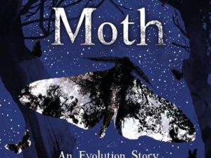 MOTH – an evolution story